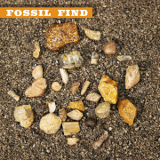 Fossil Find