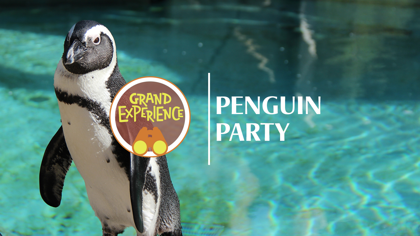 Grand Experience: Penguin Party